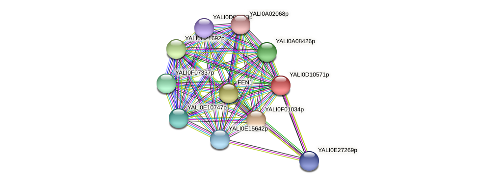 XP_502661.1 protein (Yarrowia lipolytica) - STRING interaction network