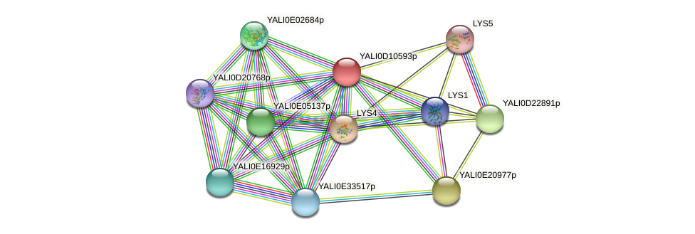 XP_502662.1 protein (Yarrowia lipolytica) - STRING interaction network
