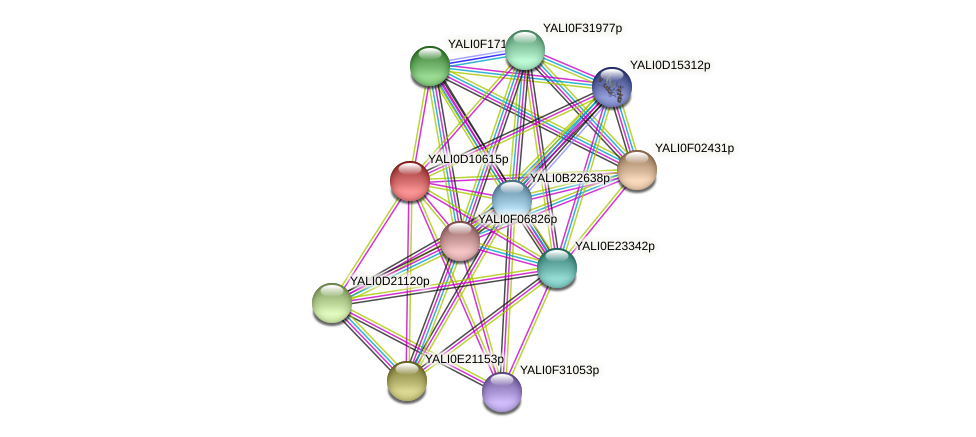 XP_502663.1 protein (Yarrowia lipolytica) - STRING interaction network