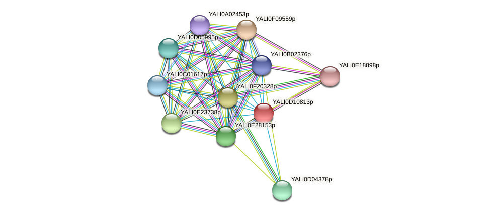 XP_502671.1 protein (Yarrowia lipolytica) - STRING interaction network