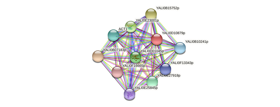XP_502674.1 protein (Yarrowia lipolytica) - STRING interaction network