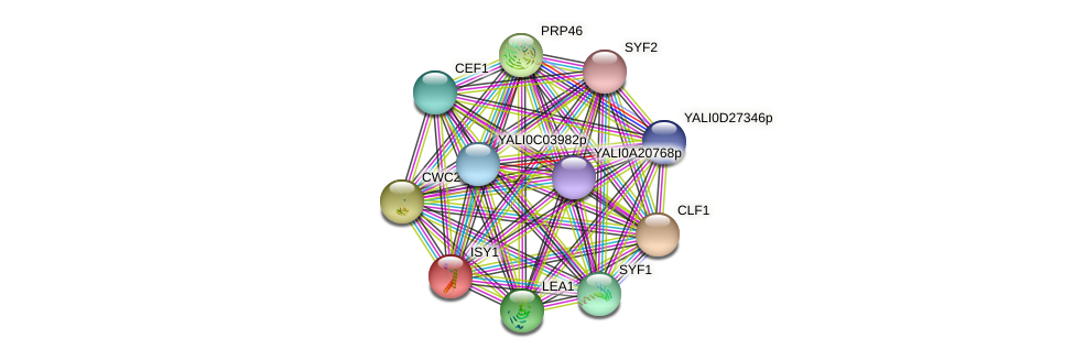 ISY1 protein (Yarrowia lipolytica) - STRING interaction network