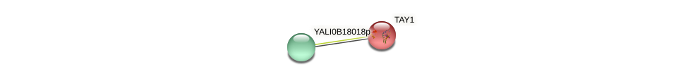 TAY1 protein (Yarrowia lipolytica) - STRING interaction network