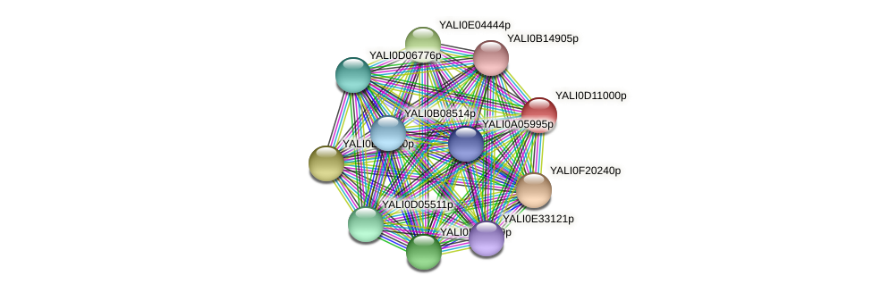 XP_502680.1 protein (Yarrowia lipolytica) - STRING interaction network