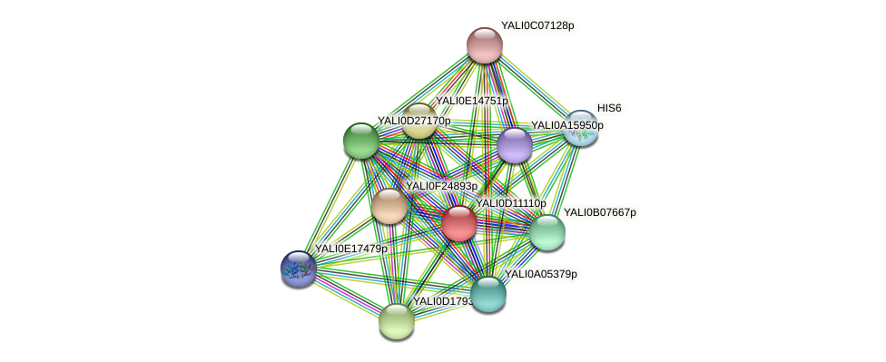 XP_502685.1 protein (Yarrowia lipolytica) - STRING interaction network