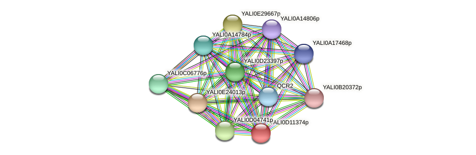 XP_502696.2 protein (Yarrowia lipolytica) - STRING interaction network
