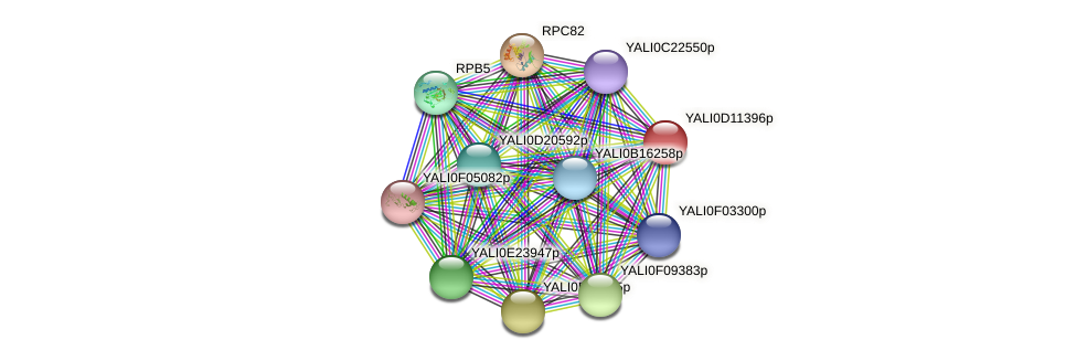 XP_502697.1 protein (Yarrowia lipolytica) - STRING interaction network