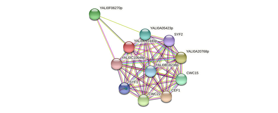 XP_502699.1 protein (Yarrowia lipolytica) - STRING interaction network