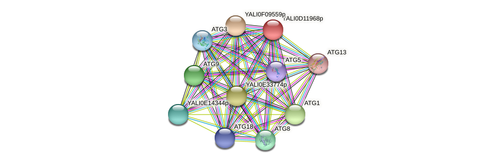 XP_502723.1 protein (Yarrowia lipolytica) - STRING interaction network
