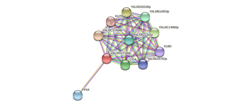 XP_502731.1 protein (Yarrowia lipolytica) - STRING interaction network