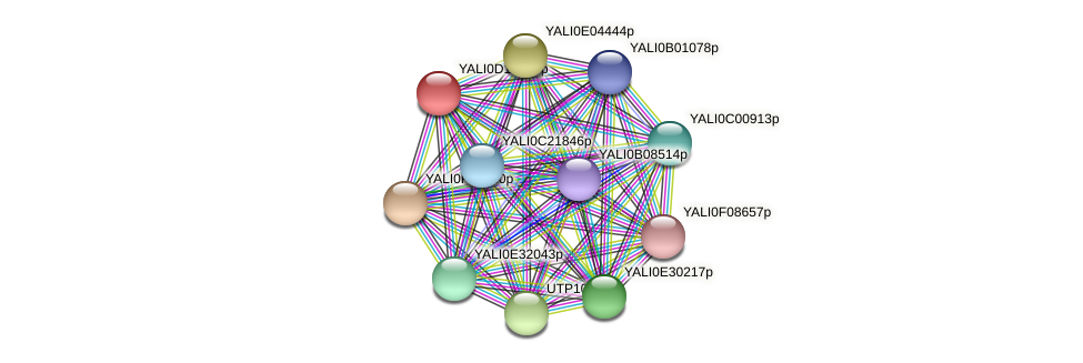 XP_502733.1 protein (Yarrowia lipolytica) - STRING interaction network