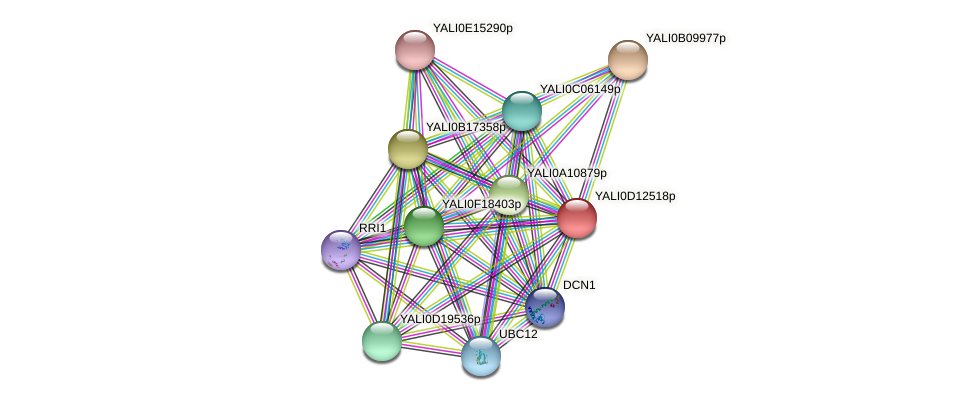 XP_502748.1 protein (Yarrowia lipolytica) - STRING interaction network