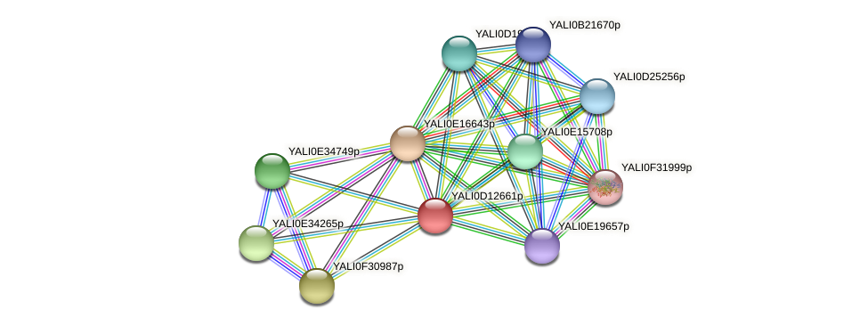 XP_502755.1 protein (Yarrowia lipolytica) - STRING interaction network
