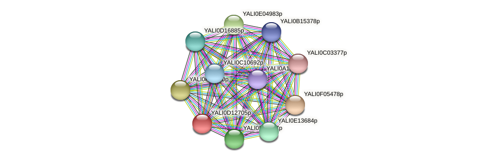 XP_502757.1 protein (Yarrowia lipolytica) - STRING interaction network