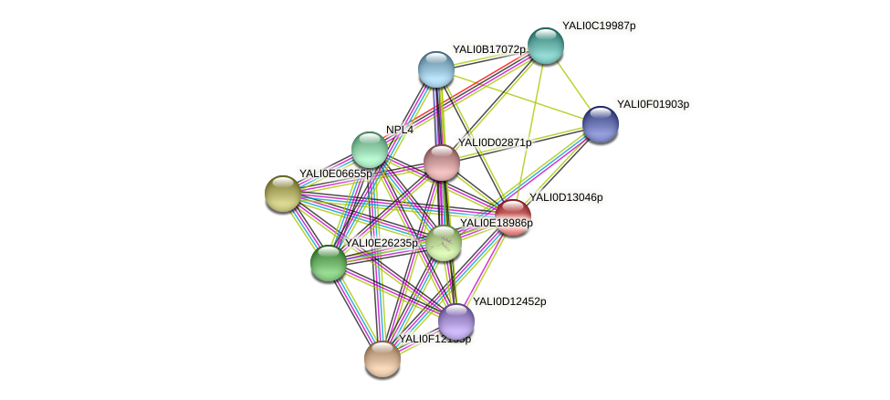 XP_502773.1 protein (Yarrowia lipolytica) - STRING interaction network
