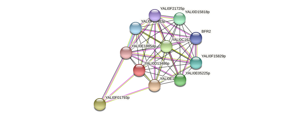 XP_502789.1 protein (Yarrowia lipolytica) - STRING interaction network