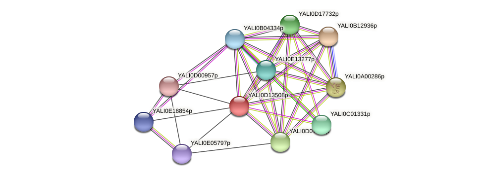 XP_502790.1 protein (Yarrowia lipolytica) - STRING interaction network