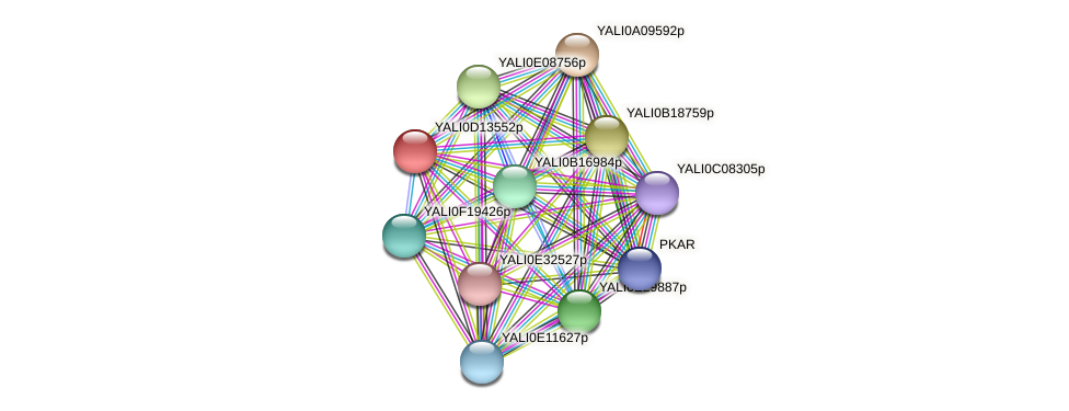 XP_502792.1 protein (Yarrowia lipolytica) - STRING interaction network