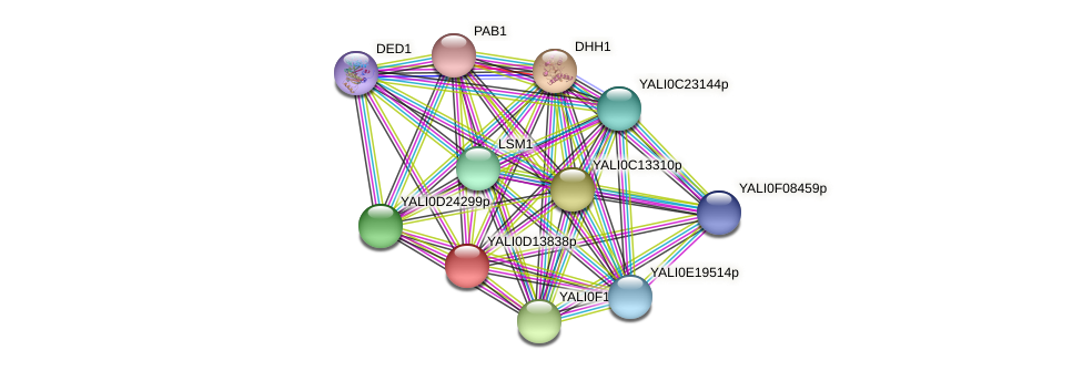 XP_502805.2 protein (Yarrowia lipolytica) - STRING interaction network