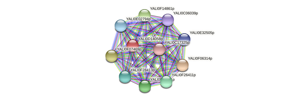 XP_502812.1 protein (Yarrowia lipolytica) - STRING interaction network