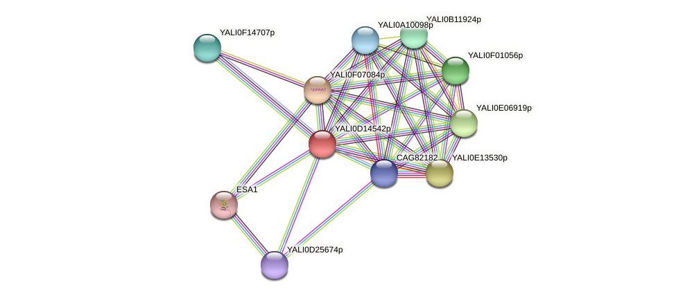 XP_502826.1 protein (Yarrowia lipolytica) - STRING interaction network