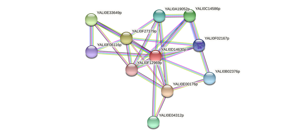 XP_502830.2 protein (Yarrowia lipolytica) - STRING interaction network