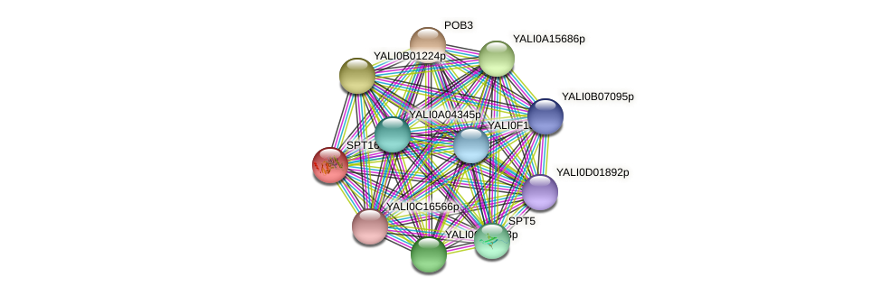 SPT16 protein (Yarrowia lipolytica) - STRING interaction network