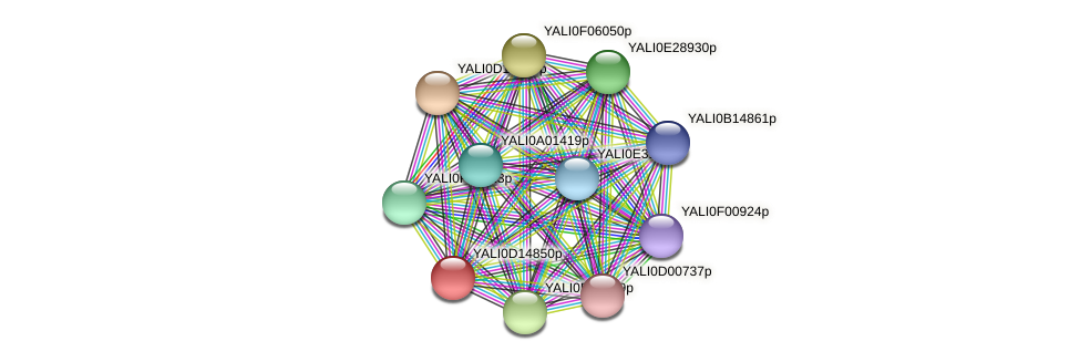XP_502836.1 protein (Yarrowia lipolytica) - STRING interaction network