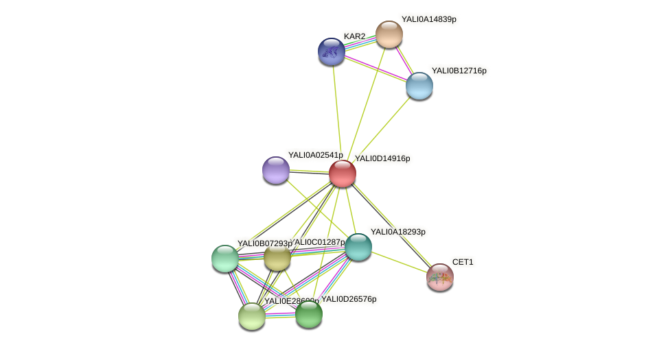 XP_502839.1 protein (Yarrowia lipolytica) - STRING interaction network