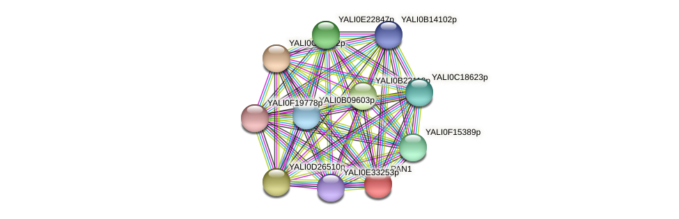 PAN1 protein (Yarrowia lipolytica) - STRING interaction network