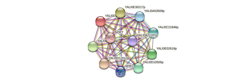 XP_502857.1 protein (Yarrowia lipolytica) - STRING interaction network