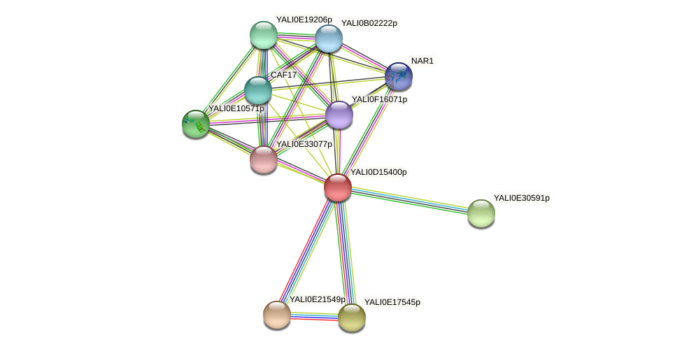 XP_502859.1 protein (Yarrowia lipolytica) - STRING interaction network