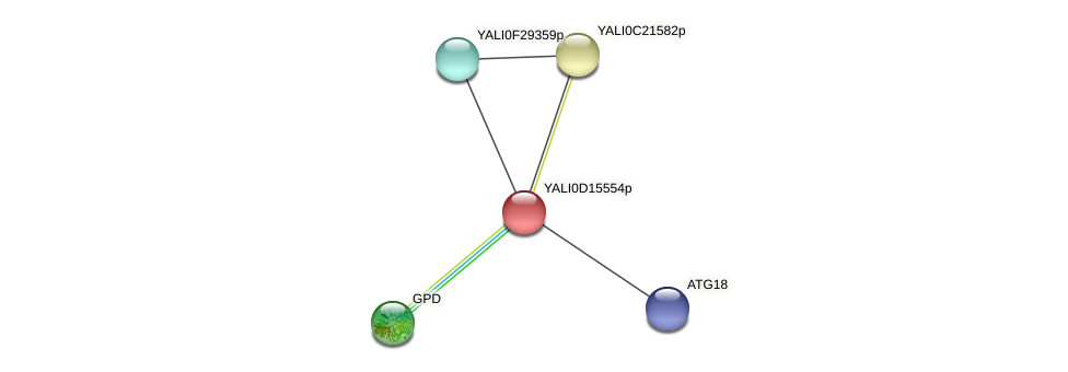 XP_502866.1 protein (Yarrowia lipolytica) - STRING interaction network