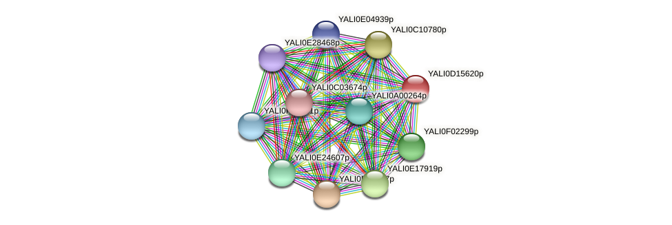 XP_502869.1 protein (Yarrowia lipolytica) - STRING interaction network