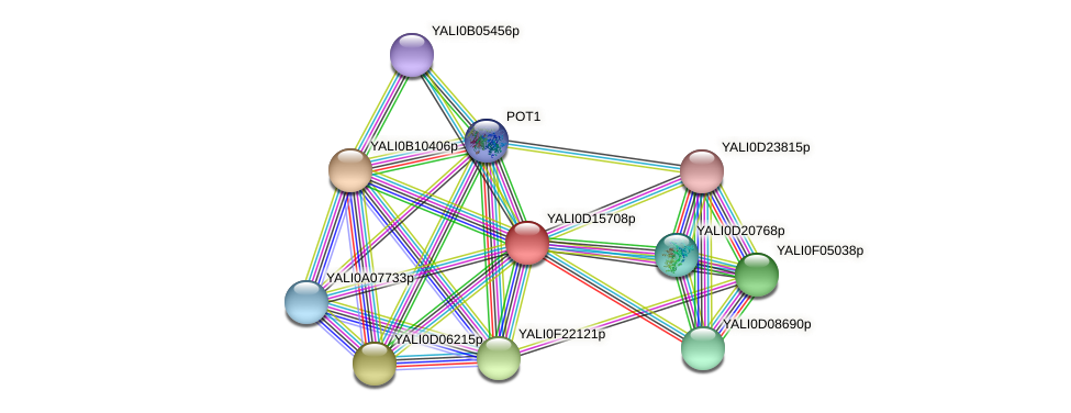 XP_502873.1 protein (Yarrowia lipolytica) - STRING interaction network