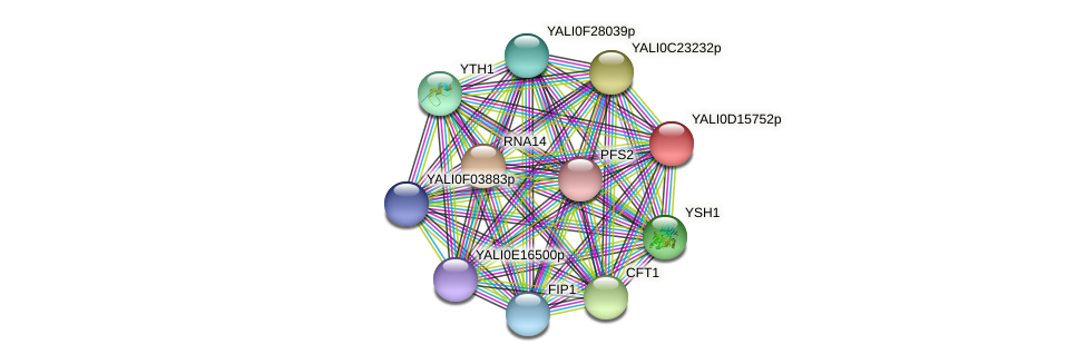 XP_502874.1 protein (Yarrowia lipolytica) - STRING interaction network