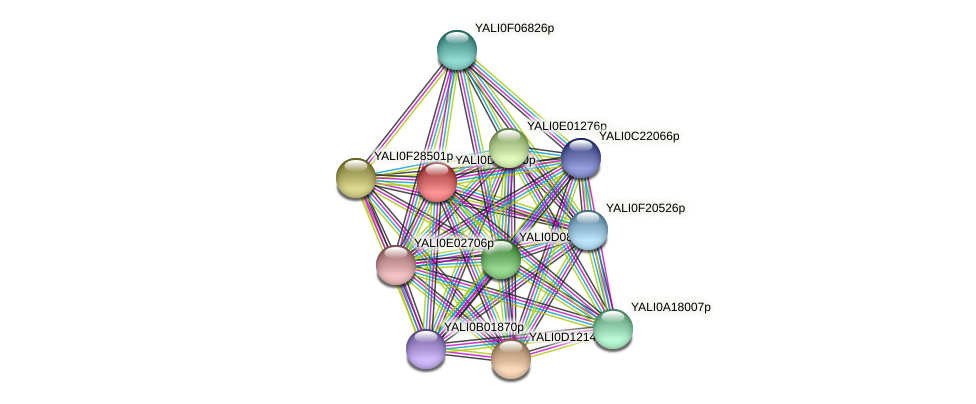 XP_502878.1 protein (Yarrowia lipolytica) - STRING interaction network
