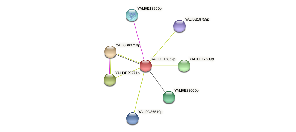 XP_502879.1 protein (Yarrowia lipolytica) - STRING interaction network