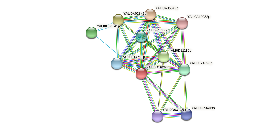 XP_502893.1 protein (Yarrowia lipolytica) - STRING interaction network