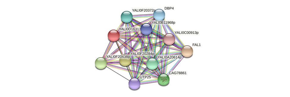 XP_502895.1 protein (Yarrowia lipolytica) - STRING interaction network