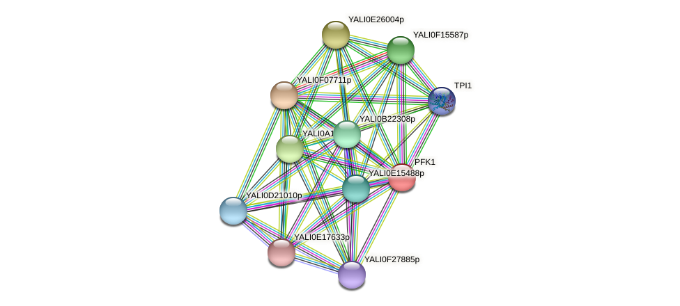 PFK1 protein (Yarrowia lipolytica) - STRING interaction network