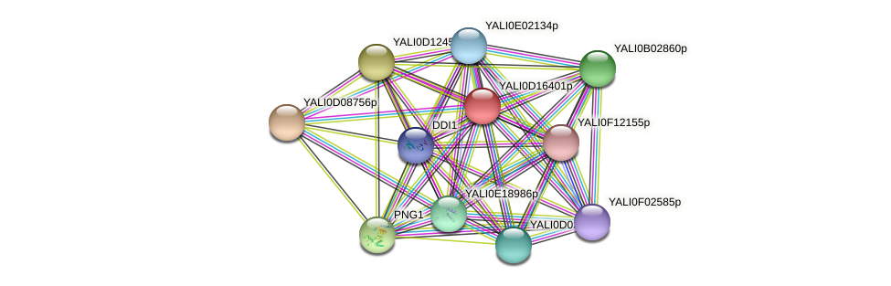 XP_502899.1 protein (Yarrowia lipolytica) - STRING interaction network