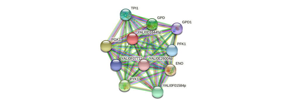 XP_502901.1 protein (Yarrowia lipolytica) - STRING interaction network