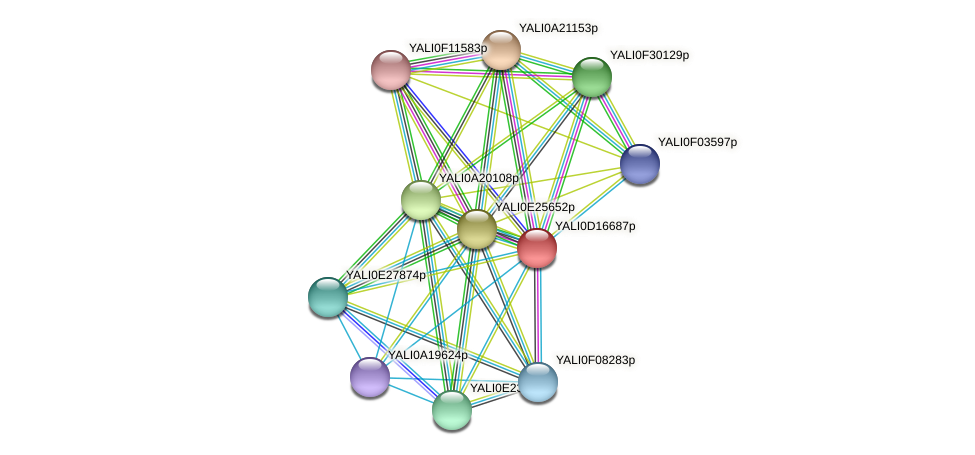 XP_502907.1 protein (Yarrowia lipolytica) - STRING interaction network
