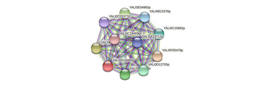 XP_502915.1 protein (Yarrowia lipolytica) - STRING interaction network