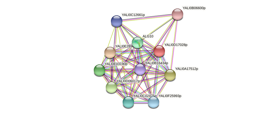 XP_502922.1 protein (Yarrowia lipolytica) - STRING interaction network