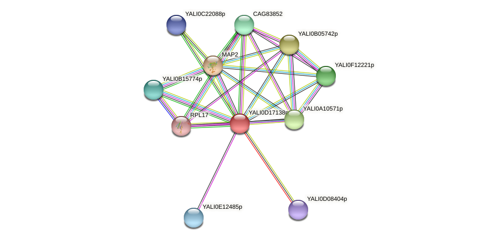 XP_502928.1 protein (Yarrowia lipolytica) - STRING interaction network