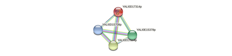 XP_502936.1 protein (Yarrowia lipolytica) - STRING interaction network