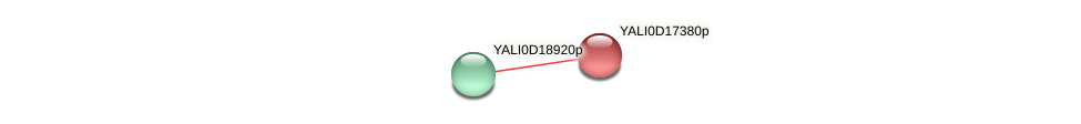 XP_502937.2 protein (Yarrowia lipolytica) - STRING interaction network