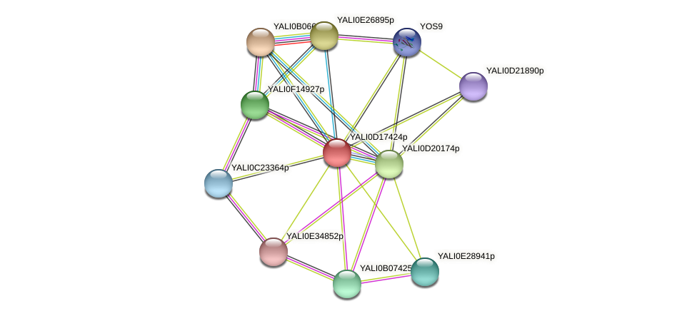 XP_502939.1 protein (Yarrowia lipolytica) - STRING interaction network